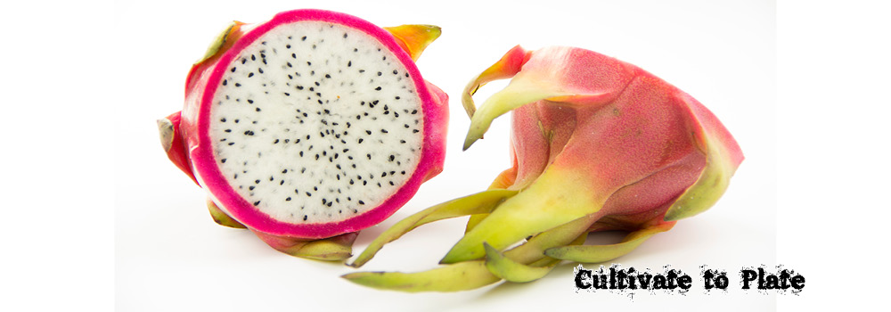 "Dragon Fruit or Pitahaya: Fruit of the ""Moonflower"" Cactus Plant"
