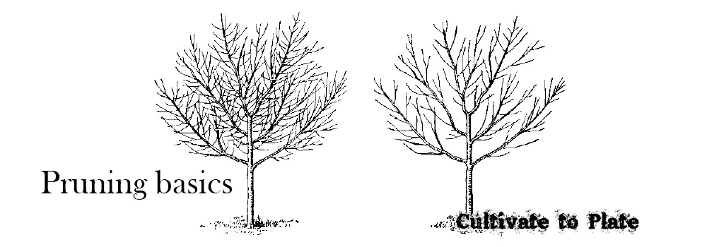 Pruning Healthy But Undesirable Growth