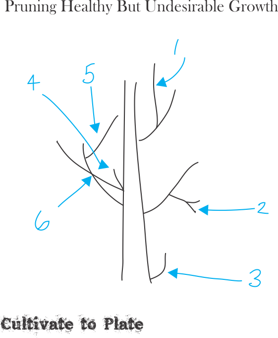 pruning-healthy-undesirable-growth