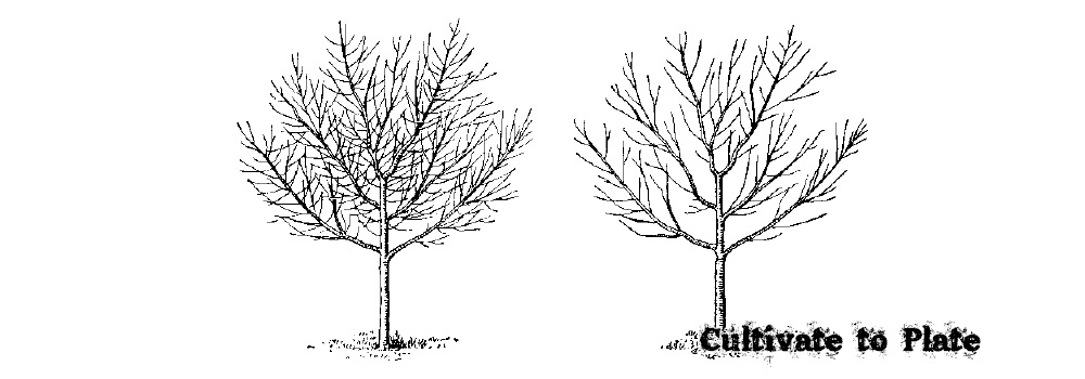 11 Reasons for Pruning