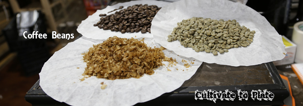 Coffee Beans – Green, Roasted, and Parchment Coating