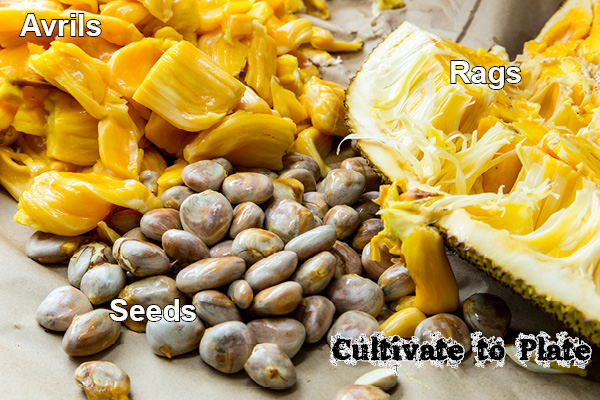 Jackfruit Avrils, Rags, Seeds | Cultivate to Plate