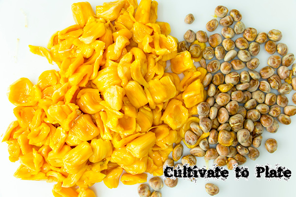 Jackfruit Avrils and Seeds | Cultivate to Plate