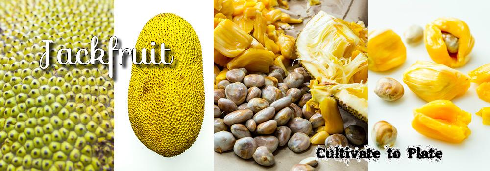 jackfruit-slider