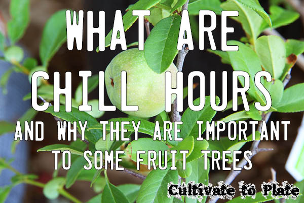 What are chill hours? Find out why the number is important to some fruit trees.