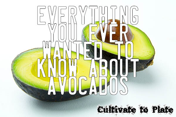 Avocados | Cultivate to Plate