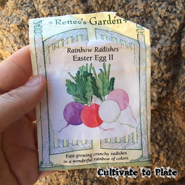 Easter Egg II F1 Radish | Cultivatetoplate.com