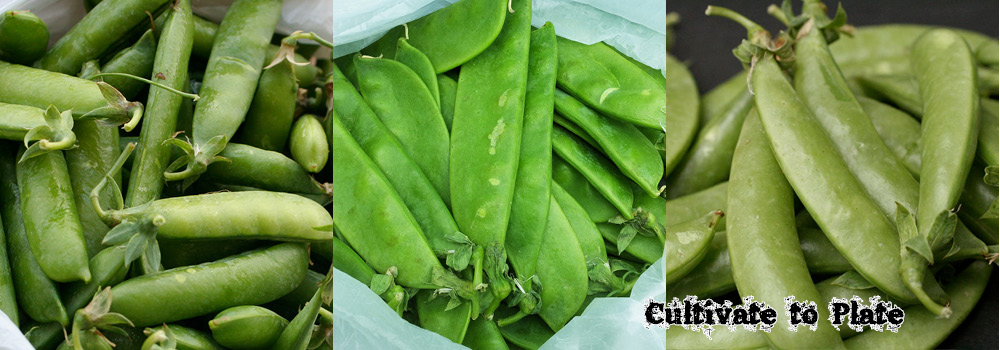 What is the Difference Between Shelling Peas, Snow Peas, and Snap Peas?
